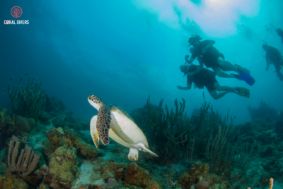 Discover Scuba Diving with this course @Coral Divers