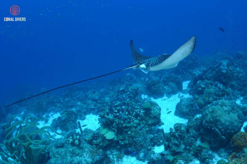 PADI advanced course @Coral Divers